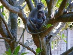 monkey mom & babe, resize